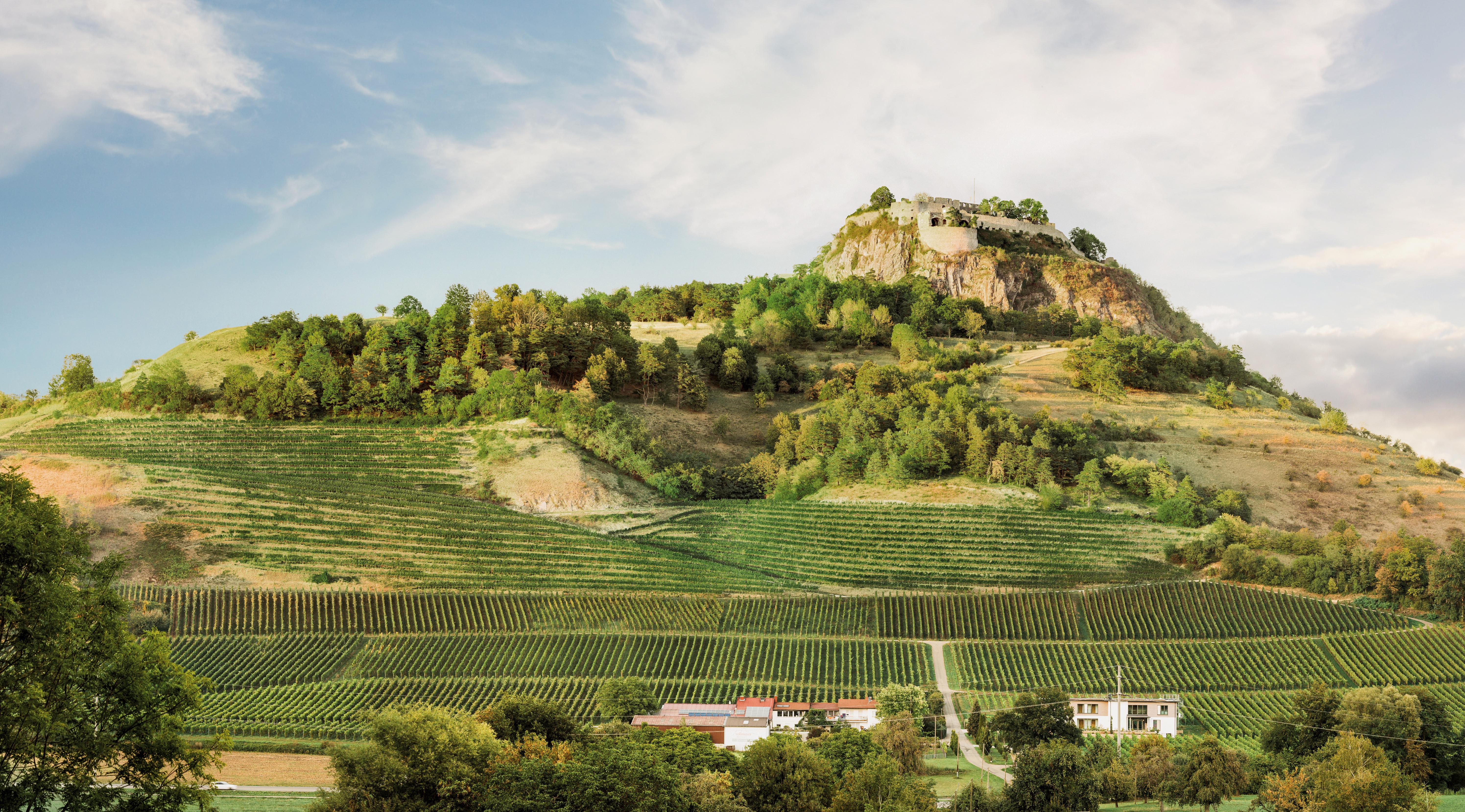 Weingut-Panorama